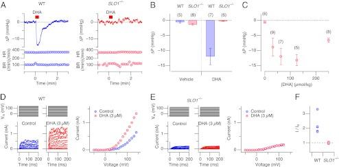 DHA senkt den Blutdruck bei Mäusen.